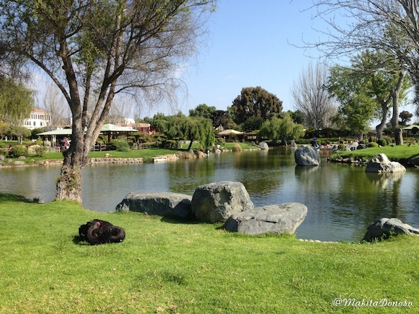 JardinJapones(2)03_makitaDonoso